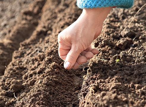 Женщина и почва
