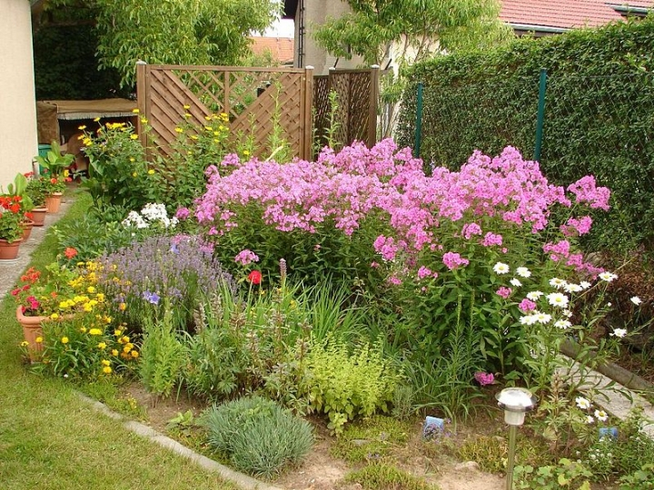 Неприхотливые долгоцветущие цветы