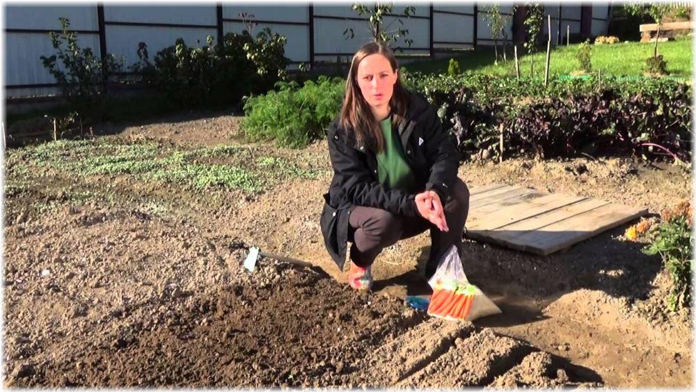 когда сажают морковку в открытый грунт недвижимости Набережные