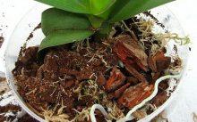 Субстрат для орхидеи