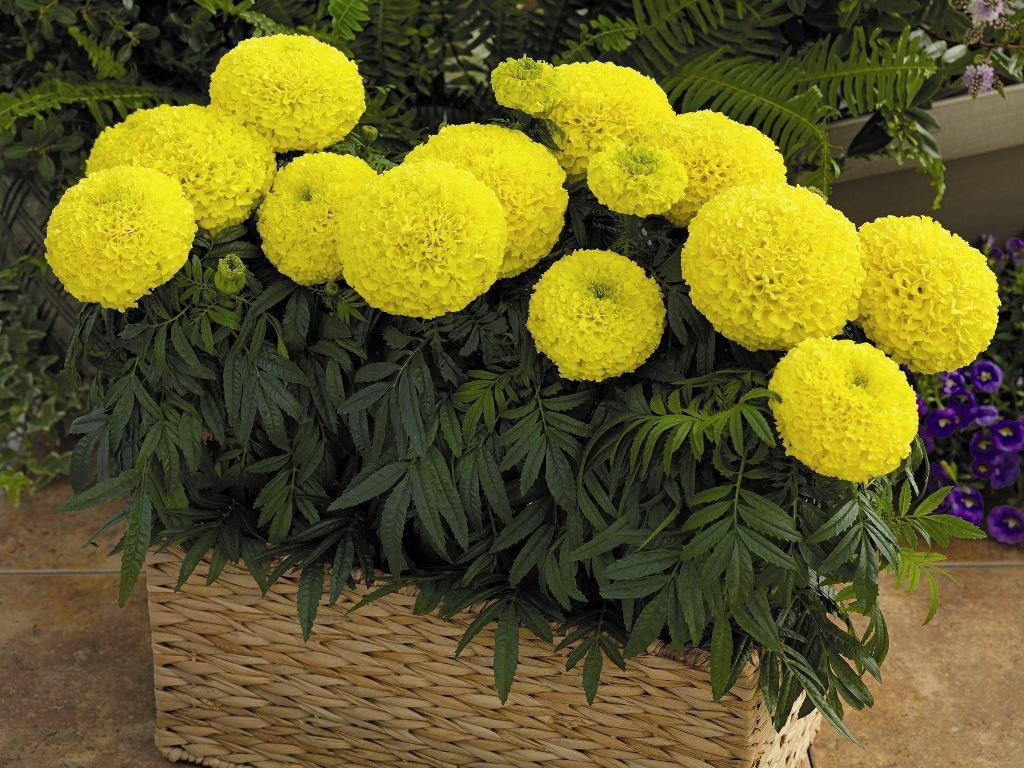 Цветов краснодаре, купить цветы для дачи москва