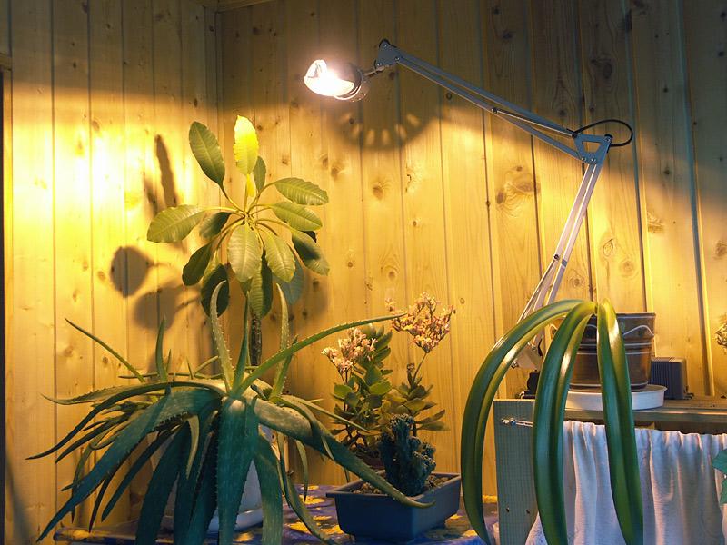 Лампы для рассады