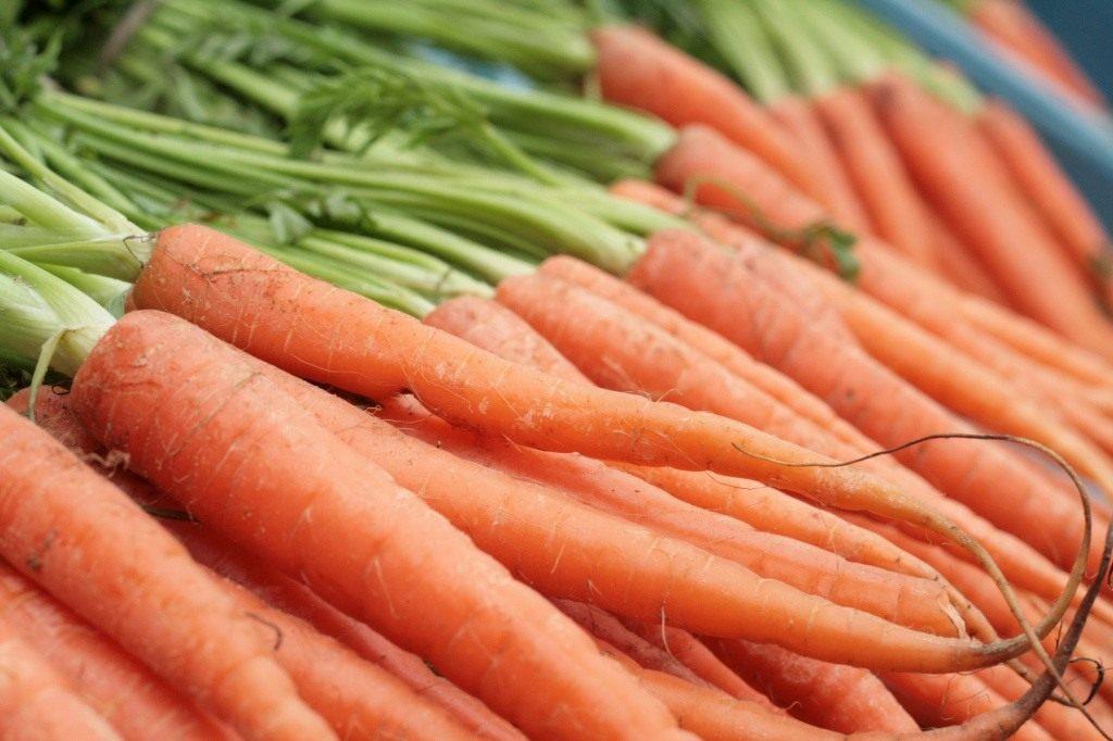 Морковь под зиму когда сажать осенью: выбор сорта, правила посева