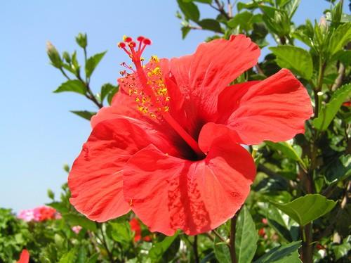 Красиво цветущие кусты цветущие все лето